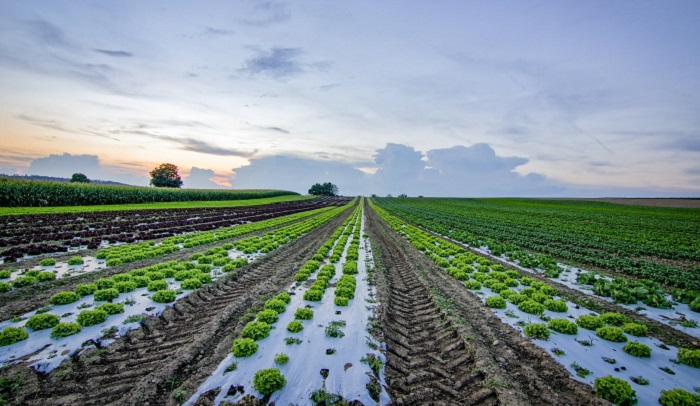 Agriculture & Allied Industries